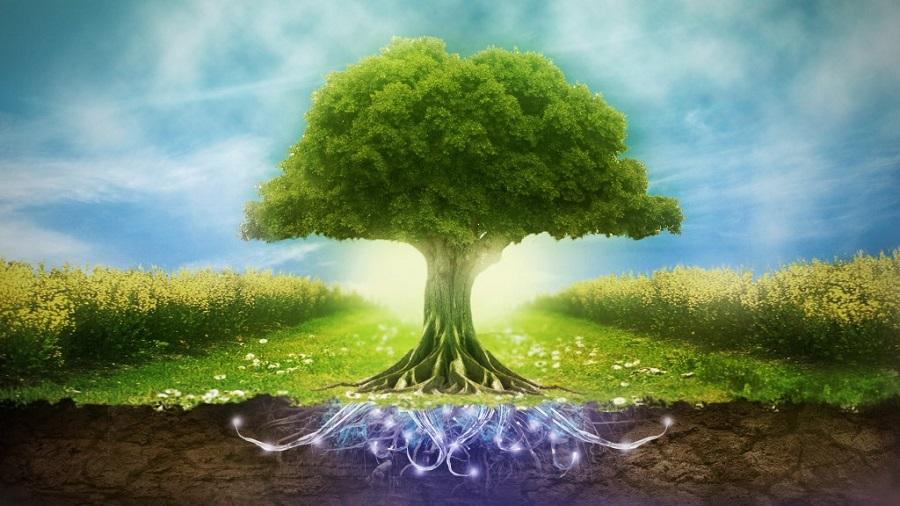 Безопасность и охрана окружающей среды